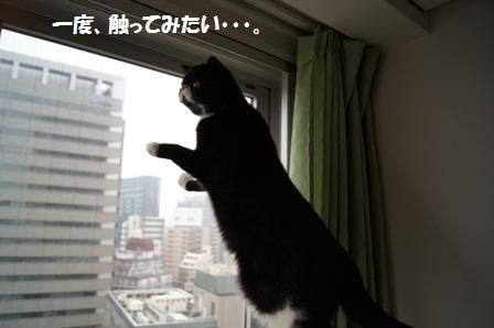 立ち上がりジャパン