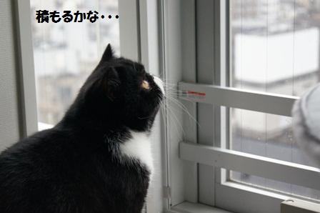 雪見ジャパン