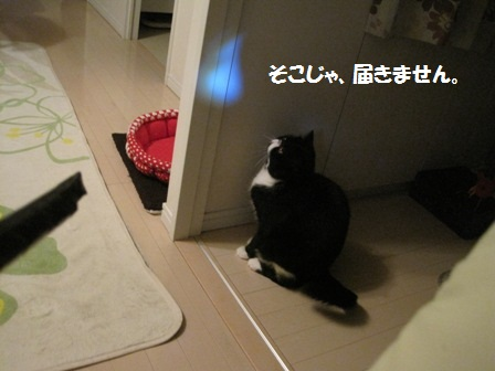 見上げるジャパン