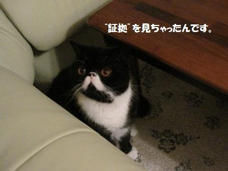 ビビるジャパン