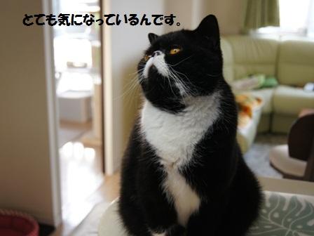 気になるジャパン
