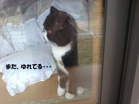 窓辺ジャパン