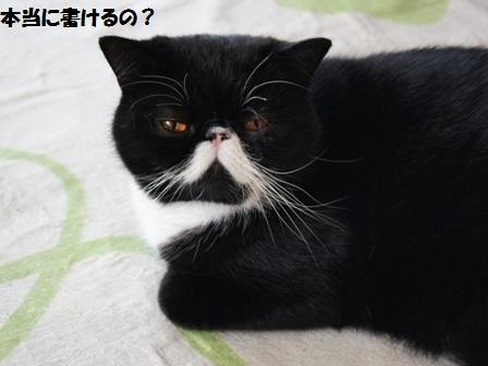 疑いジャパン