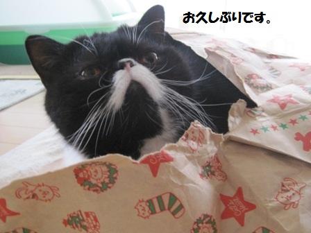 紙袋ジャパン