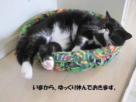 態度大ジャパン