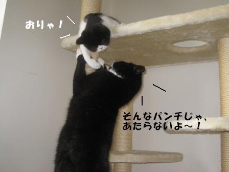 よける ジャパン