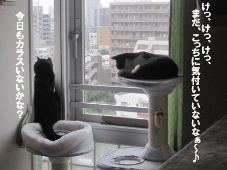 狙われてるよ!ジャパン