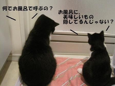 お風呂 J&C