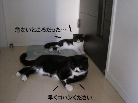 寝そべりJ&C
