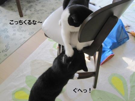 猫パンチカブキ