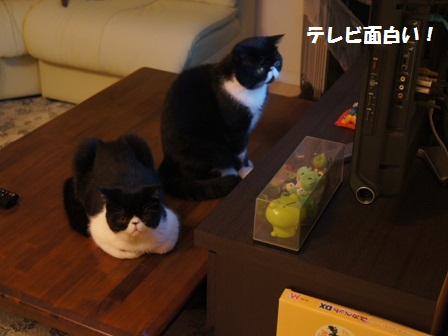 テレビジャパン