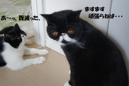 はりきるジャパン