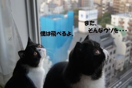 カラス見るJ&C