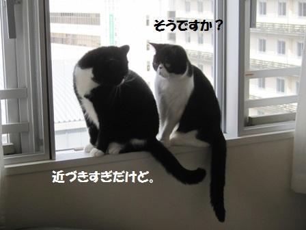 窓辺J&C