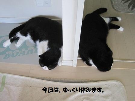 オヤスミJ&C
