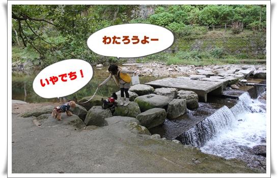 006_20101017222137.jpg