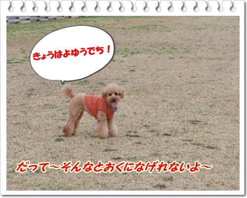 007_20100217213302.jpg