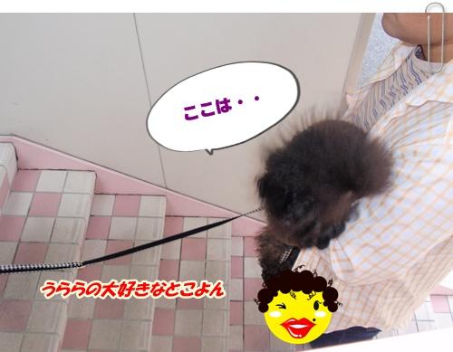 015_20100418193351.jpg