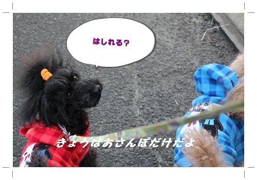 017_20110109194153.jpg