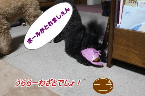 019_20100819215432.jpg