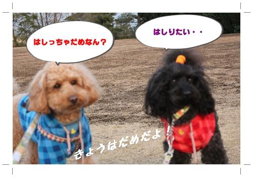 022_20110109194210.jpg