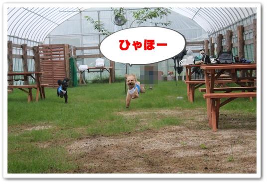023_20100705211736.jpg