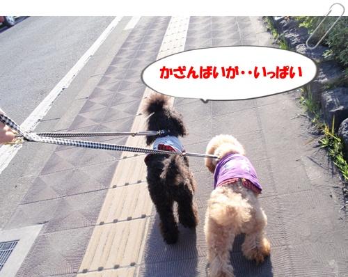 043_20100304203403.jpg