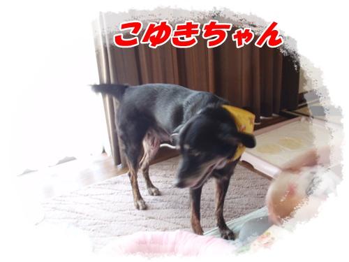 058_20100808210631.jpg