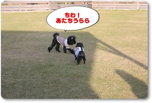 096_20101129213422.jpg