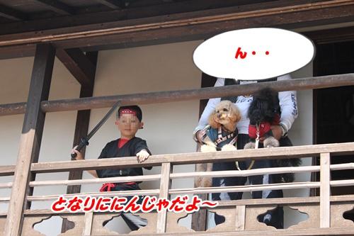 194_20101021202932.jpg