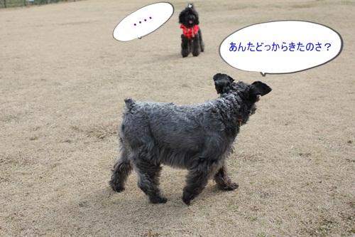 4_20110214195949.jpg