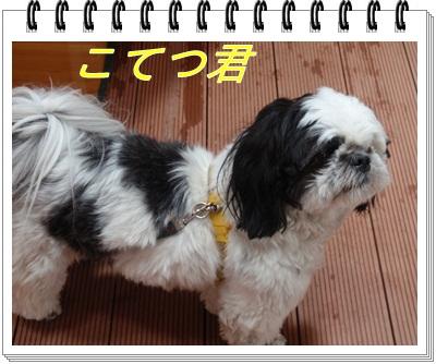 9_20110531210019.jpg