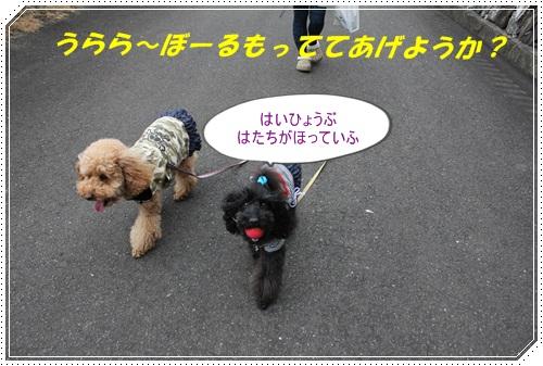 IMG_0702_20110222205441.jpg