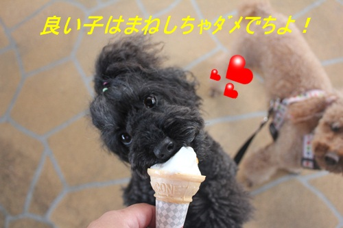 IMG_4704.jpg