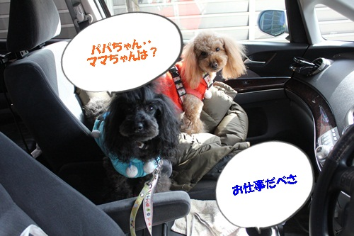 IMG_9465.jpg