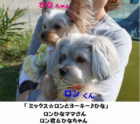 IMG_9903_20111011002908.jpg