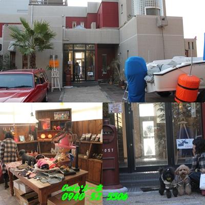 cats_20101129213548.jpg