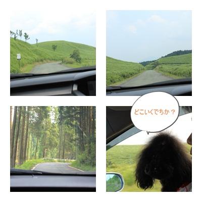 cats_20110802195435.jpg