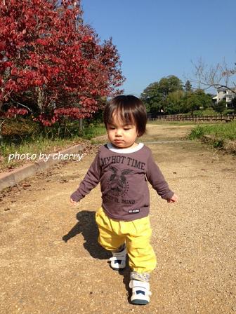 写真_nejineji11