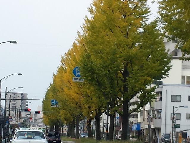 20131117_105349.jpg