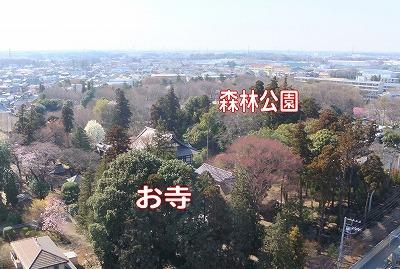 お寺と公園