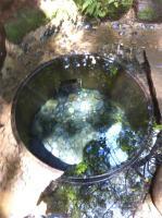 清政の井戸