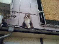 神田川の猫