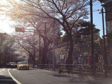 IMG_0789sakura.jpg