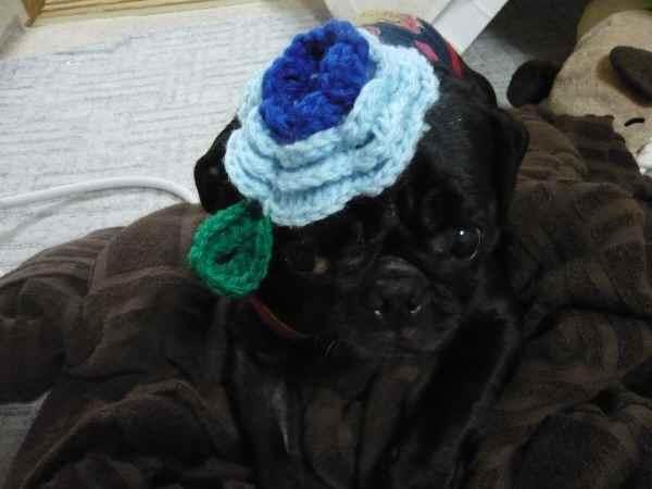 帽子でしゅか?
