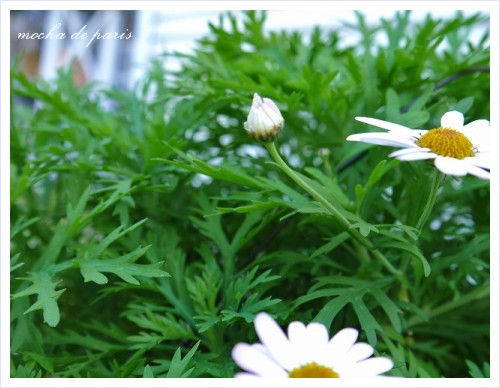 4_20111206004913.jpg