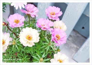 6_20110520115528.jpg