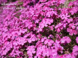 2010_0502_104403-P1000097_convert_20100502200101.jpg