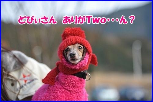 DSC_4695_20130116223117.jpg