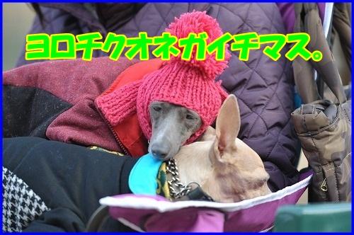 DSC_4770_20130114230846.jpg